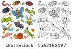 Cartoon Insects Color Painting...