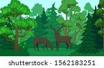 cartoon deer in forest... | Shutterstock .eps vector #1562183251