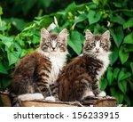 Stock photo adorable tabby kitten 156233915