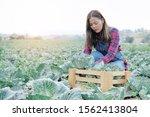 Woman Farmer Harvesting Organic ...