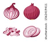 onion juicy of vegetable vector ...
