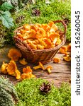 Freshly Harvested Mushrooms In...
