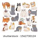 set of different cat breeds....   Shutterstock .eps vector #1562730124