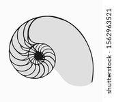 golden ratio or fibonacci in... | Shutterstock .eps vector #1562963521