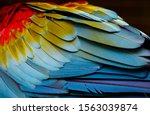 Close Up Of Colorful Bird Wing...