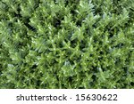 Abstract Background Leaves From ...