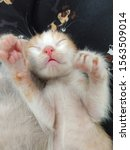 Stock photo baby cat kitten sleeping with its paws up showing its small eyes mouth and pink nose 1563509014