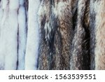 Natural fur skins of killed animals in the craft market. Killing and hunting animals. Protection of animals from poachers - stock photo