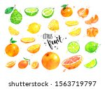 watercolor hand drawn... | Shutterstock . vector #1563719797