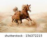 Stock photo purebred white arabian horse in desert 156372215