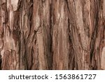 The Textured Bark Of A Young...