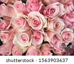close up big bunch of multiple... | Shutterstock . vector #1563903637