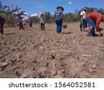 Small photo of Lampung, November 19, 2019 Indonesia, Farmers, sow the rice by all means