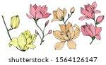 Vector Magnolia Floral...