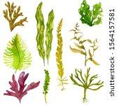 watercolor drawing edible...   Shutterstock . vector #1564157581