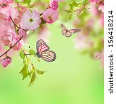 Stock photo pink flower of an oriental cherry and butterfly 156418214
