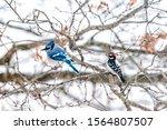 Two Birds Friends Perching...