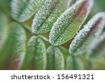 detail of a frozen autumn twig | Shutterstock . vector #156491321
