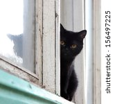 Black Cat Sitting On A...