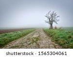 Moody Foggy Autumn Landscape...
