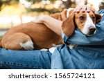 Small photo of Photo of young man in denim clothes sitting on bench in park with his canine dog