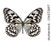 White Butterfly With Black...