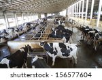 Many cows in the hangar with...