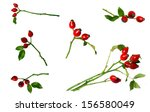 Rose Hips  Isolated On White