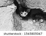 Homeless Kittens Are Hiding In...