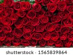 Background Of Many Red Roses...