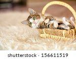 Stock photo kitten in a basket lying on his back age month 156611519