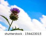 Thistle Flower Against Blue Sk...