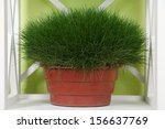 Grass In Pot On Shelf On Green...