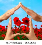 Female hands showing home sign over red summer poppy field conceptual isolated with clipping path - stock photo