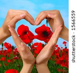 Female hands showing heart symbol over colorful poppy field summer nature background love and peace concept isolated with clipping path - stock photo