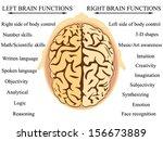 brain hemisphere functions... | Shutterstock .eps vector #156673889