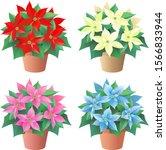 Christmas Flower  Poinsettia In ...