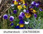 Colorful Flowers In The...