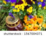 Colorful Flowers And Lantern In ...