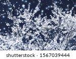 branding  magic and festive... | Shutterstock . vector #1567039444