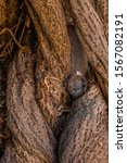 Closeup Of Gnarled Tree Trunk...
