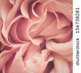 Abstract Of A Pink Rose Macro