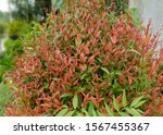 A Small Bush Plant With Bright...