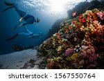two freedivers swim over the... | Shutterstock . vector #1567550764