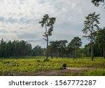 Open Green Grassland Surrounde...
