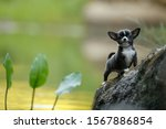 Chihuahua Puppy In The Field On ...