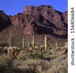 Saguaro Cactus Are The Symbol...
