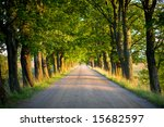 Tunnel Of Green Trees On...