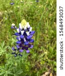 Small photo of A magnificent purple hued flower amiss the green waves of grass.