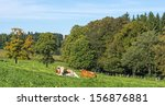 View of a typical cow paddock near Munich in the alps of Bavaria - stock photo